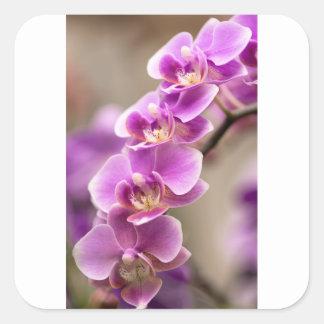 Tiefrosa Phalaenopsis-Orchideen-Blumen-Kette Quadratischer Aufkleber