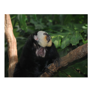Tier am Zoo Postkarte
