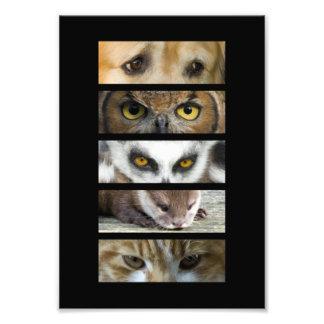 Tier-Augen Photo Druck