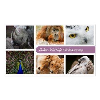 Tier-Fotografie-Visitenkarte