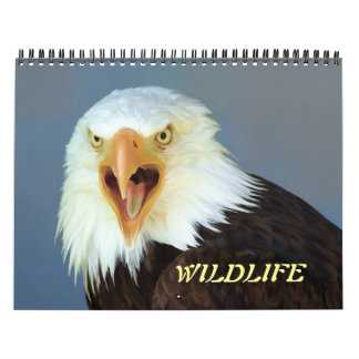 Tier-Kalender Abreißkalender