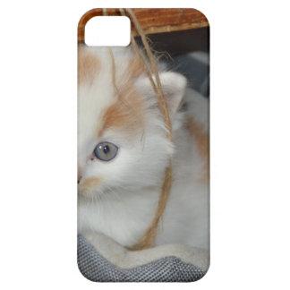 Tier-Pets niedlicher KätzchenKitty Katzen iPhone 5 Schutzhülle