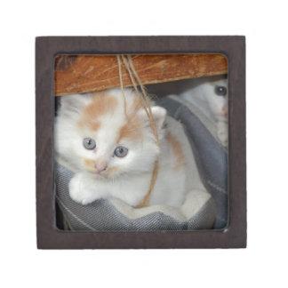 Tier-Pets niedlicher KätzchenKitty Katzen Schachtel