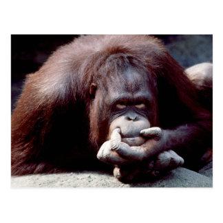 Tier-Set - Primate 10 Postkarte