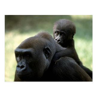 Tier-Set - Primate 11 Postkarte