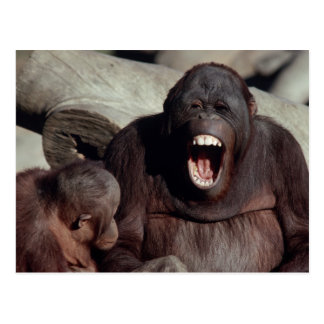 Tier-Set - Primate 1 Postkarte