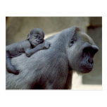 Tier-Set - Primate 3 Postkarten