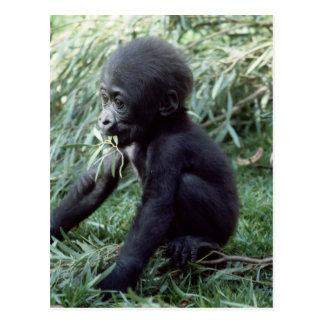 Tier-Set - Primate 8 Postkarte