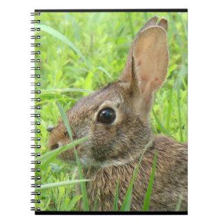Tier-Tier-Kaninchen-Fotografie Notizblock