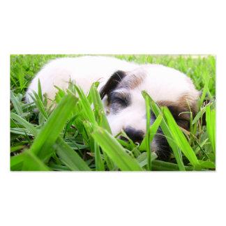 Tierarzt-u. Hundehütten-Geschäfts-Karte - Jack Rus Visitenkarten Vorlage