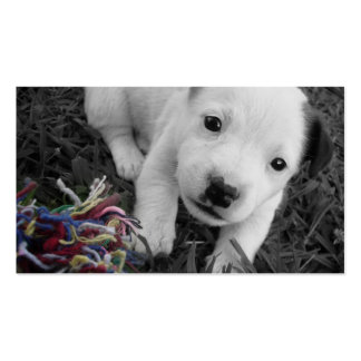 Tierarzt-u. Hundehütten-Geschäfts-Karte - Jack Rus Visitenkarten