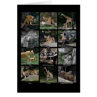 Tierbaby-Collage Karte