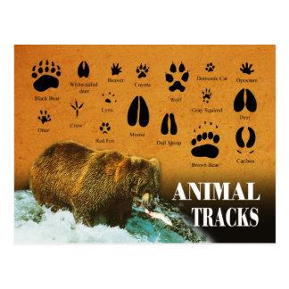 Tierbahnen Postkarte