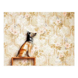 Tierdarstellung, Neuheitseinzelteil, Regal, knick Postkarte