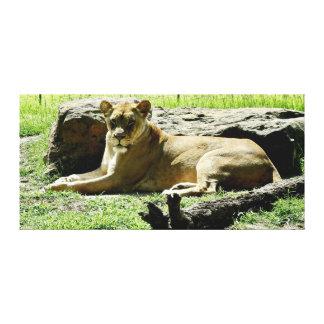 Tierdruck - Löwe Leinwanddruck