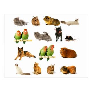 Tiere Postkarten