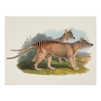 Tiere von Australien der tasmanische Tiger Poster