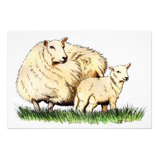 TierFotodruck mit zwei Schafen Kunstphoto