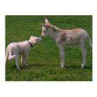 Tierfreundschaft,junger Esel mit Hund, Postkarte