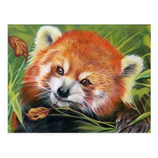 Tierkunstpostkarte des roten Pandas Postkarte