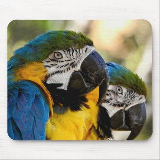 TierMousepad Reihe- blauer u. gelber Macaw