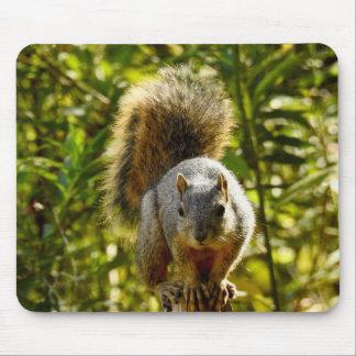 TierMousepad Reihe - schneidiges Eichhörnchen Mousepad