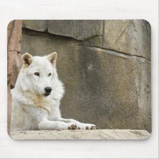TierMousepad Reihe - weißer Wolf