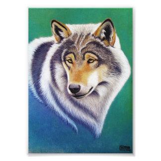 Tierporträt des grauen Wolfs im PastellFotodruck Fotos