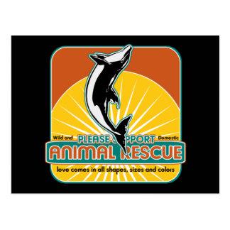 Tierrettungs-Delphin Postkarten