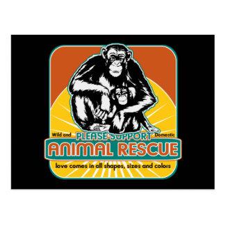 Tierrettungs-Schimpanse Postkarten