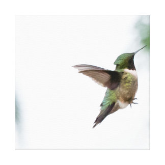Tiervogel-Rubin-throated Kolibri Leinwanddruck