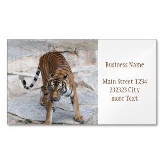 Tiger 1216 AJ Visitenkartenmagnet