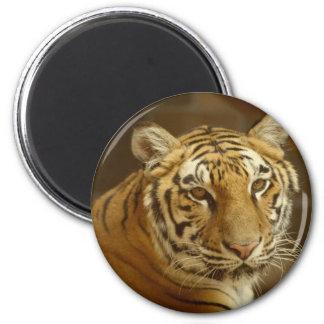 Tiger-Bild Runder Magnet 5,1 Cm