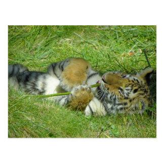 Tiger CUB, das mit einem Stock spielt Postkarte