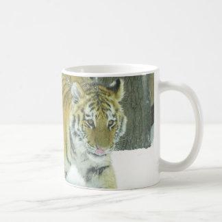 Tiger CUB im Schnee, der Lippen leckt Kaffeetasse