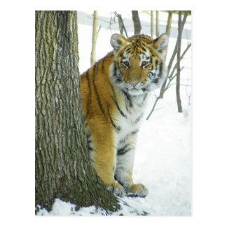 Tiger CUB im Schnee, der um Baum späht Postkarte