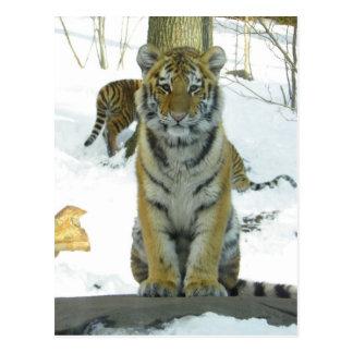 Tiger CUB im Schnee-Porträt Postkarte