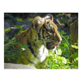 Tiger-CUB-Porträt-Zunge Postkarte