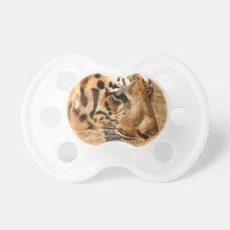 Tiger, der in Indien sich anpirscht Schnuller