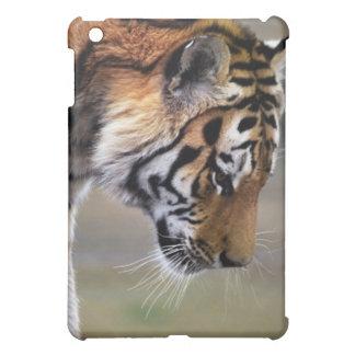 Tiger, der unten klettert iPad mini hüllen