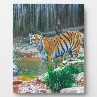 Tiger Fotoplatte
