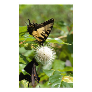 Tiger-Frack-Schmetterling auf Wildblume Briefpapier