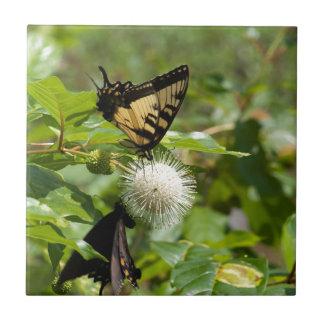 Tiger-Frack-Schmetterling auf Wildblume Fliese