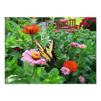 Tiger-Frack-Schmetterling auf Zinnia-Blume Fotodruck