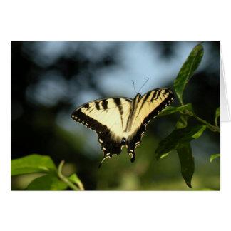 Tiger-Frack-Schmetterling Karte