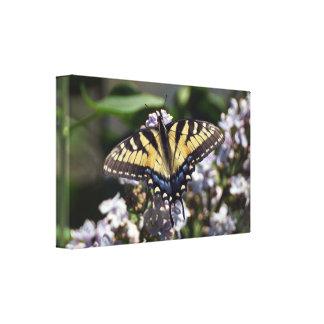 Tiger-Frack-Schmetterlings-Leinwand-Druck Leinwanddruck