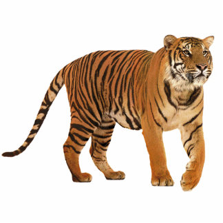 Tiger Freistehende Fotoskulptur