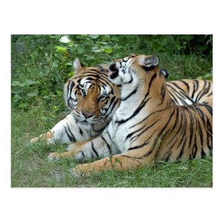 tiger-friends-b-2 postkarte