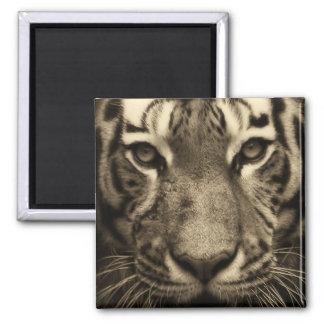 Tiger-Gesicht in den Sepia-Tönen Quadratischer Magnet