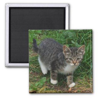 Tiger-gestreifter Kätzchen-Magnet Quadratischer Magnet
